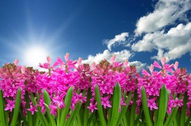 flower-3219718_1280
